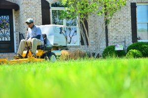 jak kosić wysoką trawę